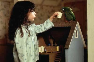 'Paulie': pratende papegaai op avontuur